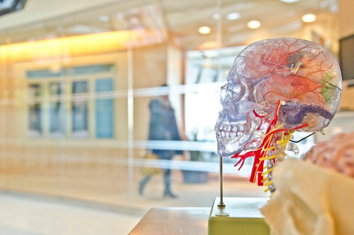 Anatomisch hoofd